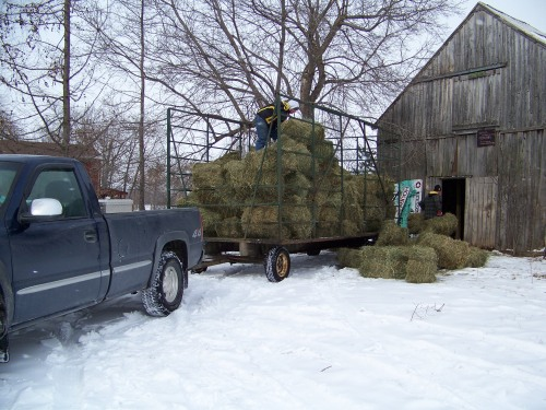New hay arriving