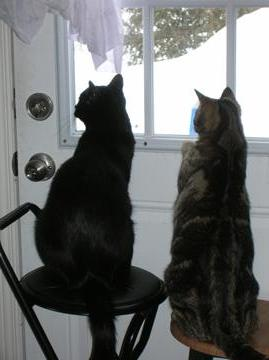 Maverick and Tibby-Tabby, birdwatching.